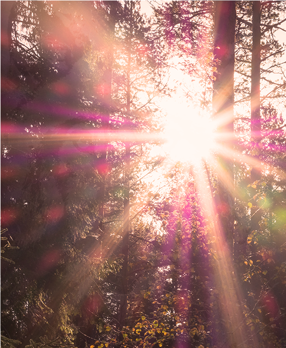 Douce lumière à travers les arbres