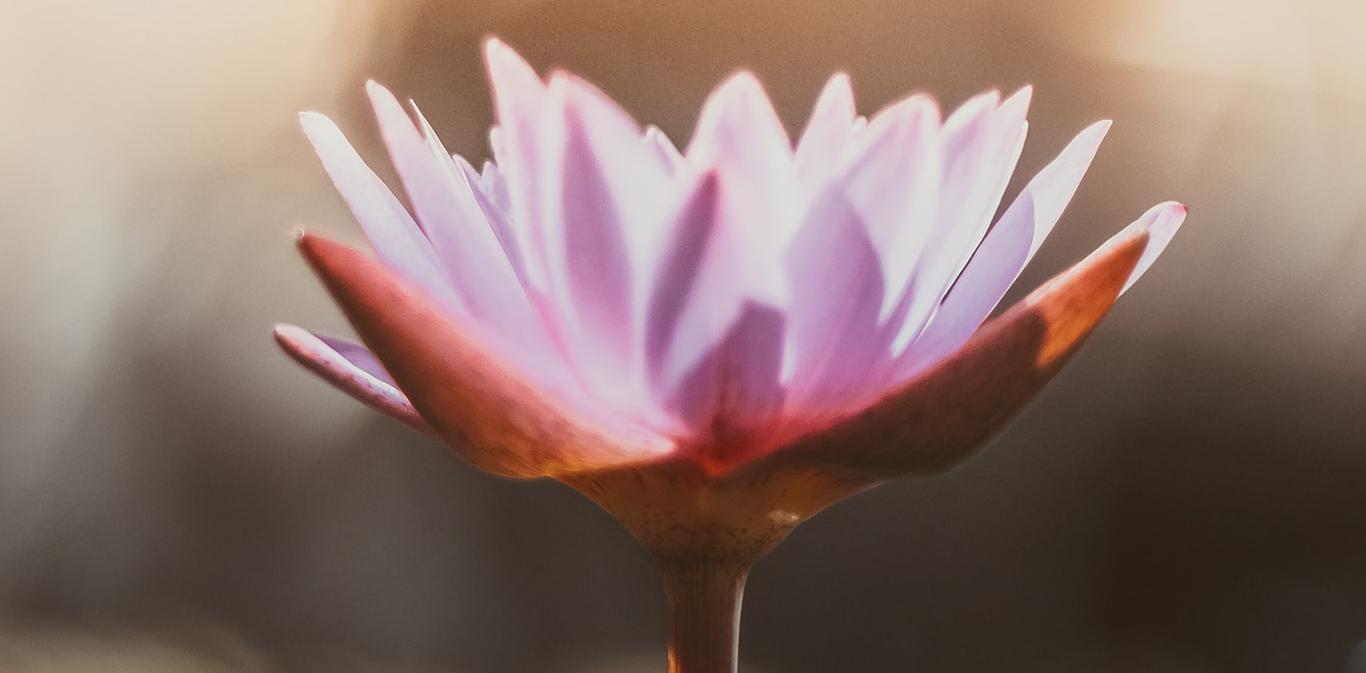 Fleur de Lotus Soin Access Bars