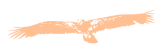 Aigle Animal Totem