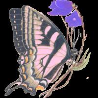 Papillon_Elodie