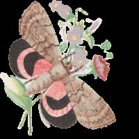 Papillon_Helene